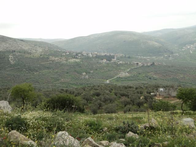 The beautiful hills of Palestine. By: Randa Abdel-Fattah.